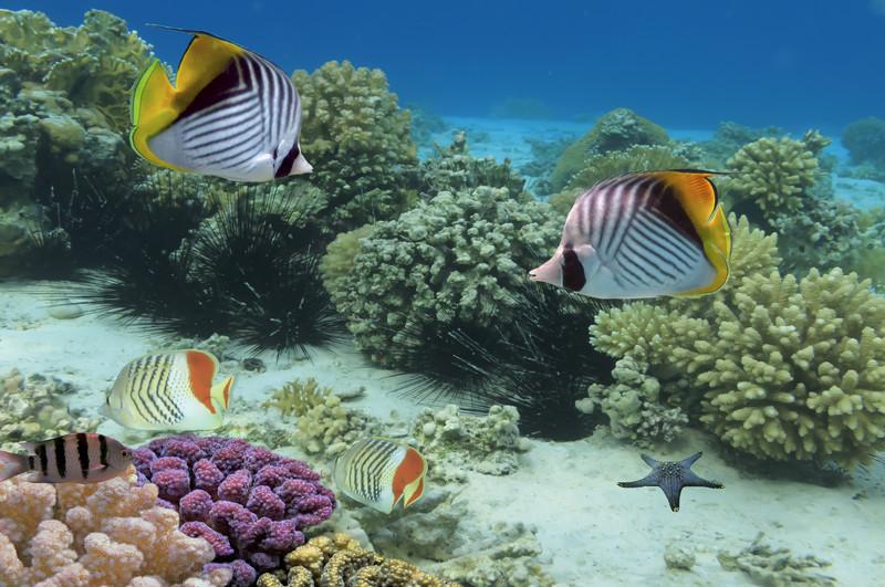freedivingfish